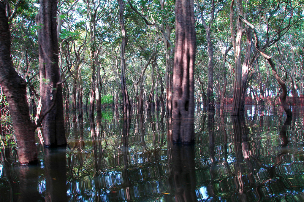 Flooded forest, Cambodia